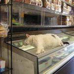 【画像】バカッター民、懲りずにコンビニの業務用アイスケースで寝る