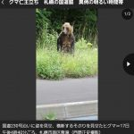 【画像】ヒグマ、札幌の国道脇で仁王立ち