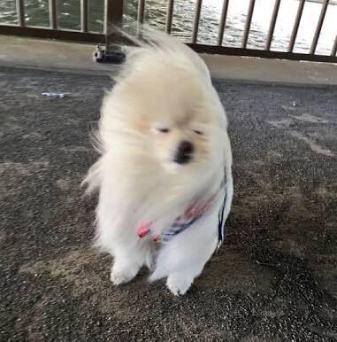 【画像】イッヌ「台風なんて知らん、散歩いくンゴ!散歩行くンゴ!!」