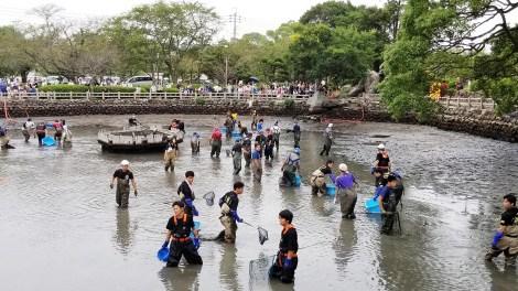 【悲報】池の水を全部抜くやつ、遂に魚3000匹を殺害してしまう