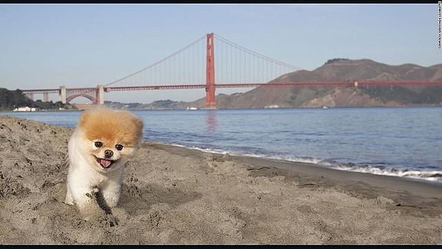 【訃報】「世界一かわいい犬」が死ぬ、ポメラニアンのブゥ