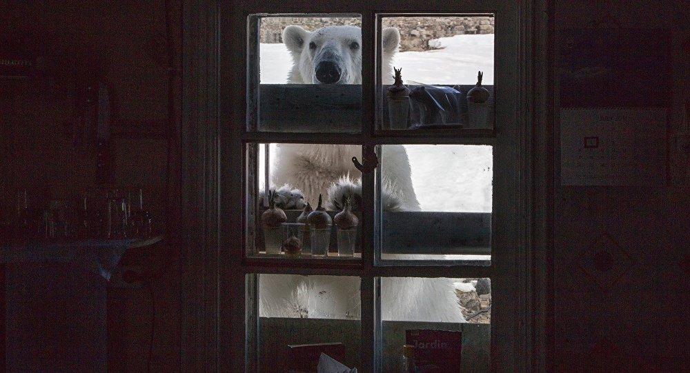 【画像】シロクマさん、人間共を包囲する