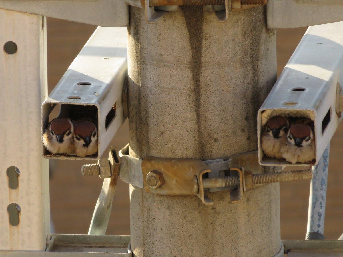 【画像】害獣スズメ、監視カメラを使用不能にする