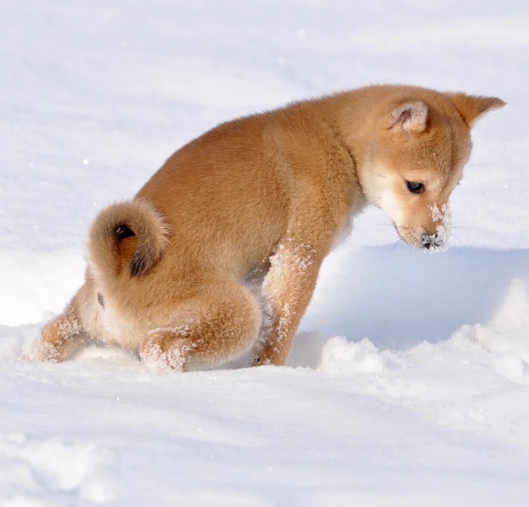 【画像】イッヌ、初めての雪w