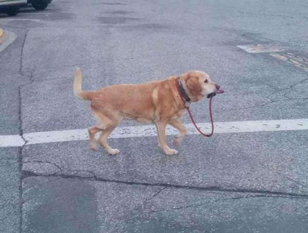 【画像】イッヌ、相次ぐ非常識飼い主動画にブチ切れ「もう人間に散歩は任せられない」