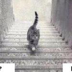 【画像】 この猫は階段を上がってる様に見えるか降りてる様に見えるか