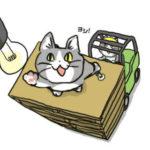 【画像ヨシ!】現場猫、実在した