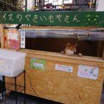 【画像】犬が店番する焼き芋屋が話題に! 可愛すぎる おまえらより働くな