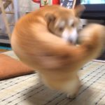 【画像】強烈な右フックを繰り出すイーヌ、発見される