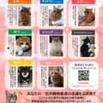 【画像】滋賀・湖南市の「こにゃん市長選」8匹のにゃんこが激戦