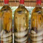 コブラ酒を仕込んだ男性、1ヶ月間じっくり熟成し開封したところ中のコブラに咬まれて死亡