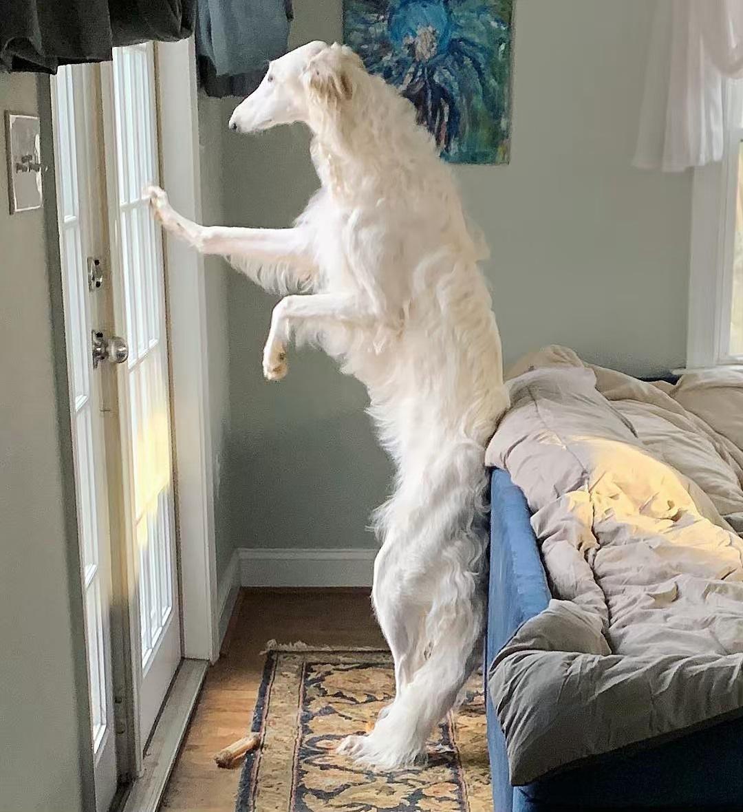 【画像】イッヌ「ドアを開けてほしいザンス」