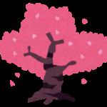 「桜」を「パンティ」に変えると絶景