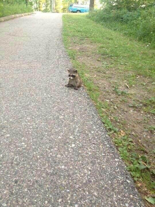 【画像】道にかわいい子犬がいたぞwww