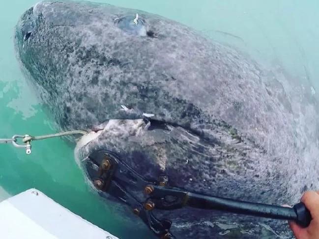 【画像】512歳のサメ、見つかる