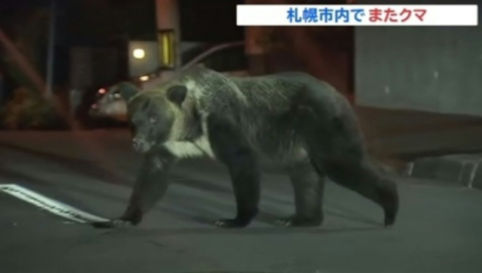 【画像】札幌の住宅街にヒグマ。試されすぎだろこの大地…