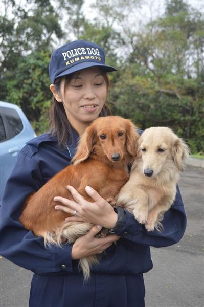 【画像】警察犬になったダックスフントwww