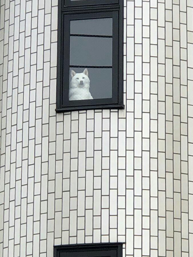 【画像】監視ーヌ、爆誕する