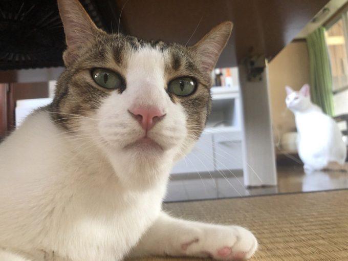 【画像】猫、アゴをハチに刺される