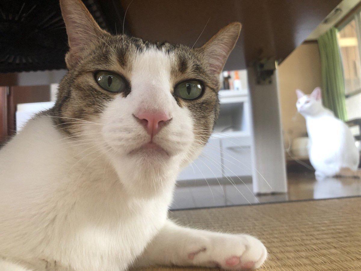 【画像】猫、アゴをハチに刺されるw