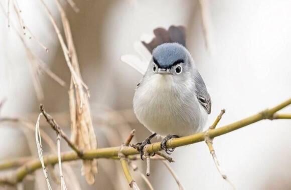 【画像】両津勘吉みたいな鳥が発見されるw