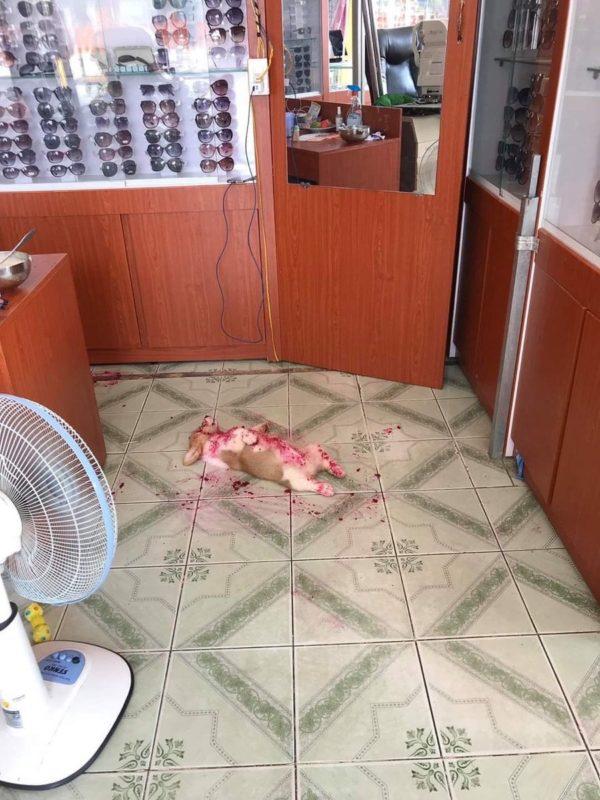 【画像】犬さん、無惨な姿で発見される…