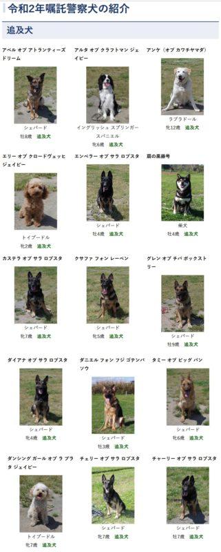 【画像】茨城県警の警察犬、みんな可愛くて頼もしい