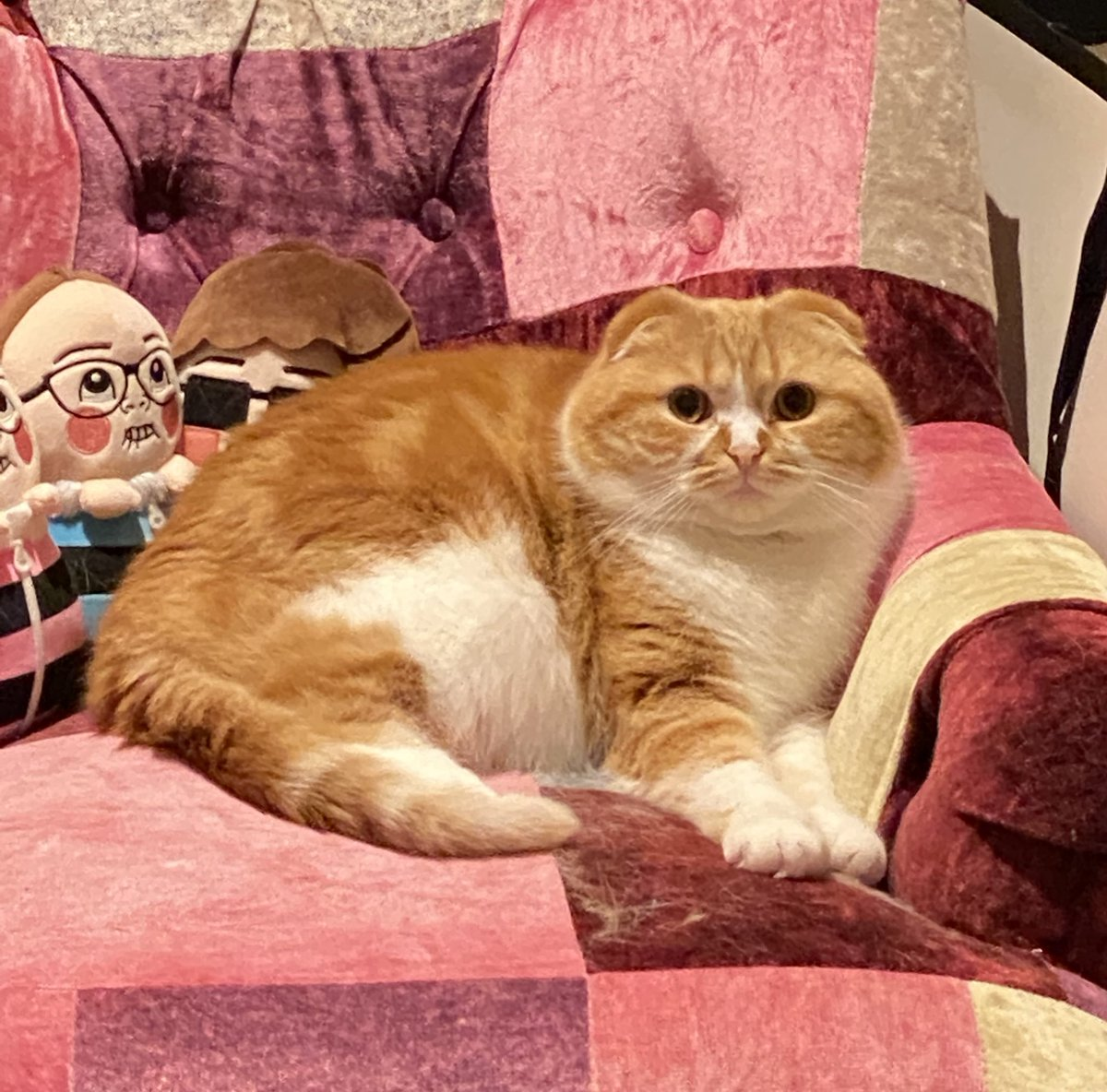 【画像】ヒカキンの猫、デブすぎて可愛くなくなる