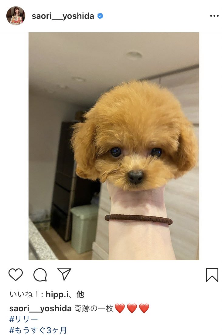 【画像】吉田沙保里、自らの愛犬の首を刎ねてインスタに画像を投稿してしまう