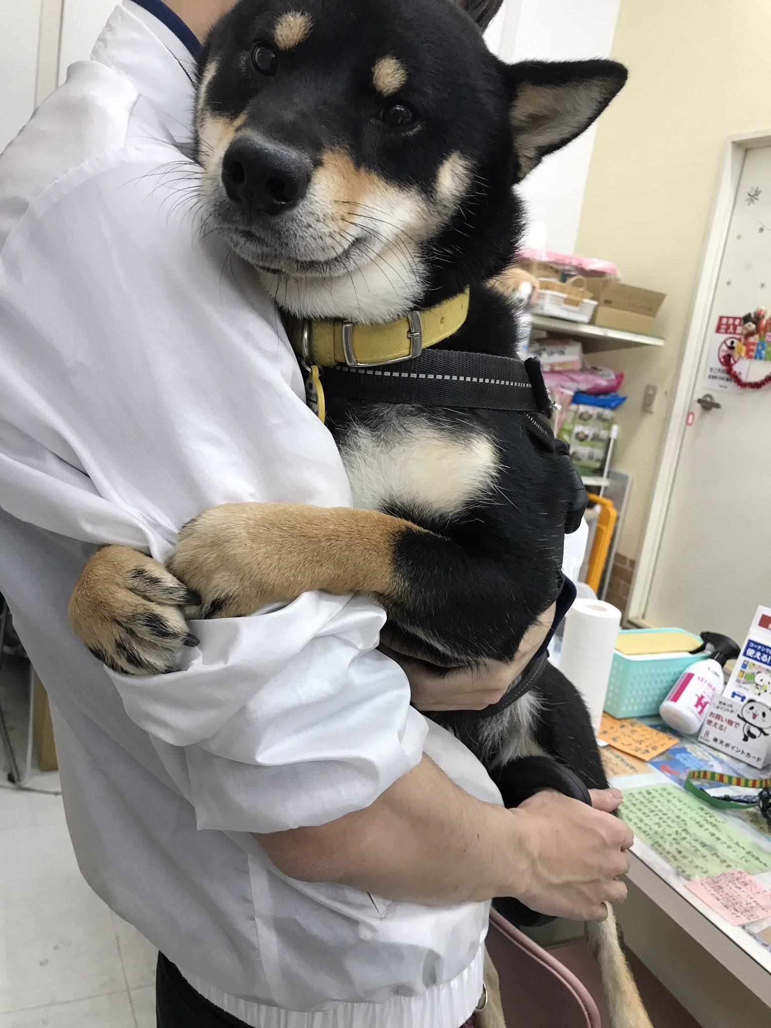 【画像】イッヌ、動物病院を恐がる