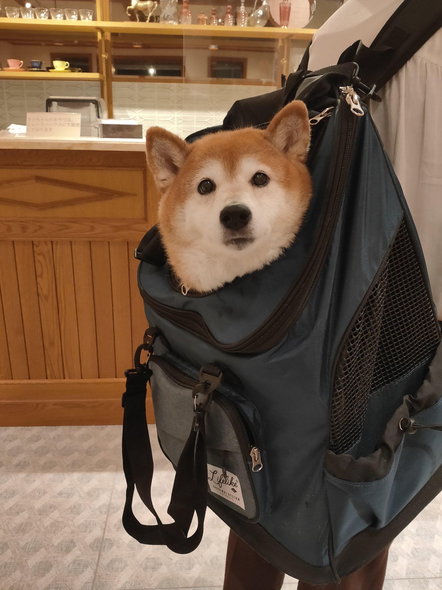 【画像】イッヌ、お荷物だった