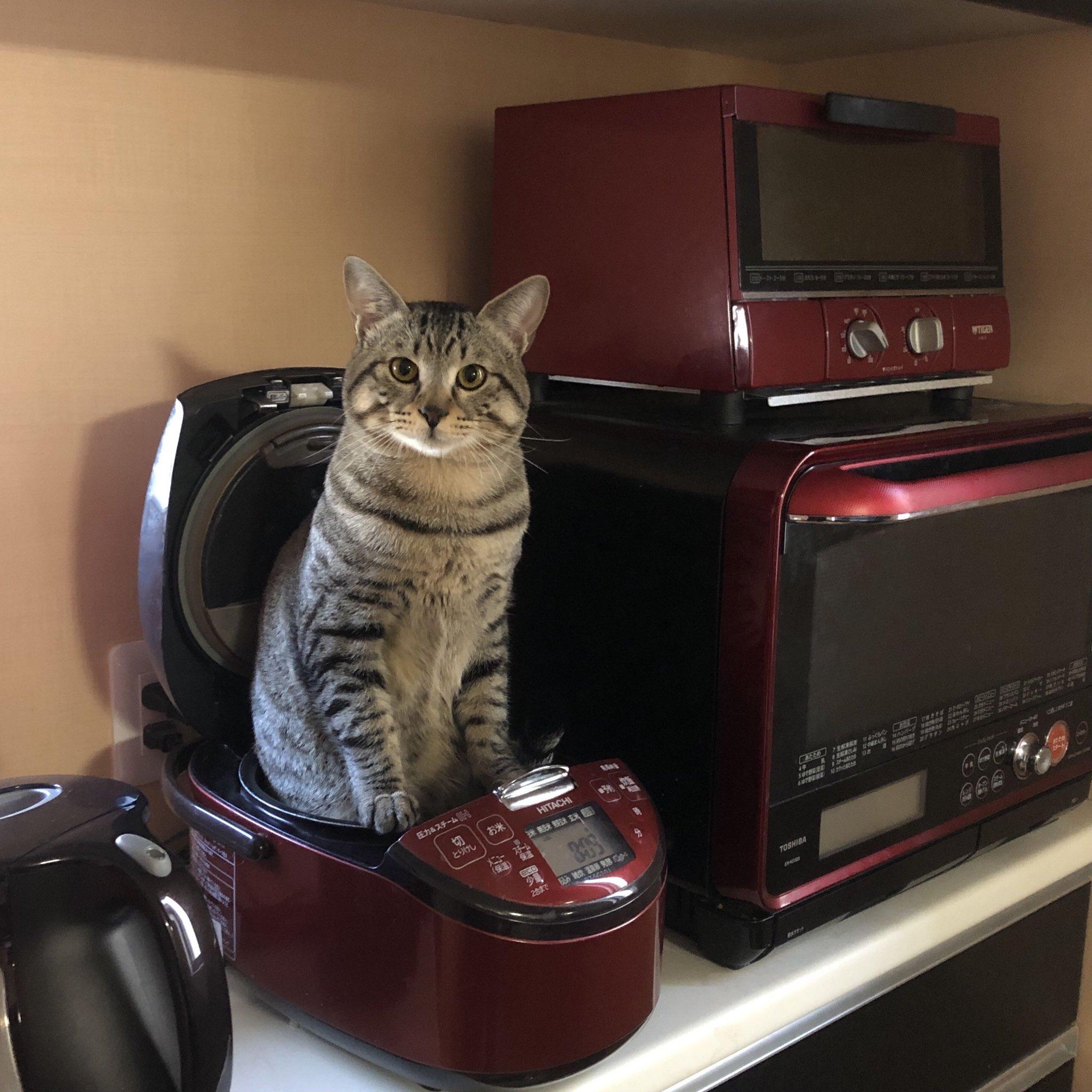 【画像】猫ちゃん、炊飯器に入れられてしまうw