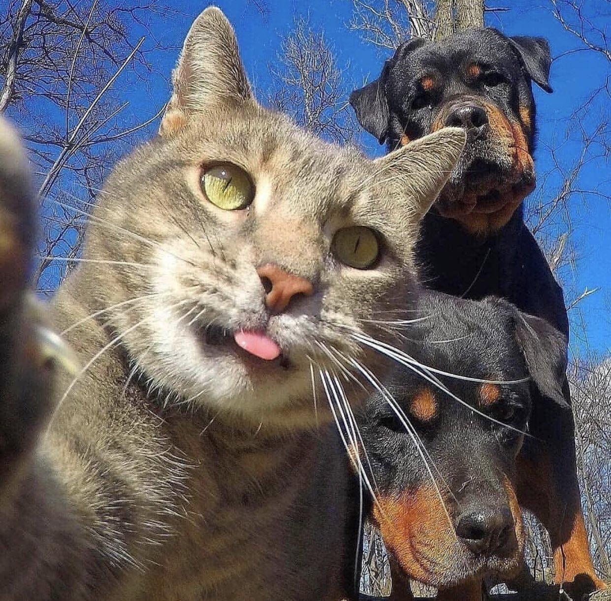 【画像】猫「おい犬カスはよせぇや、準備ええか、ほな撮るで。はい、カツオブシ!」