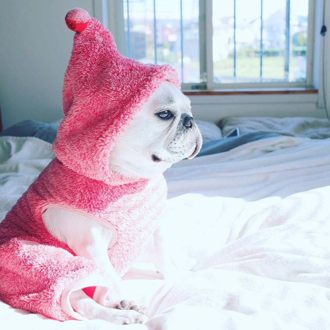 【画像】イッヌ、服が暖かくてご満悦