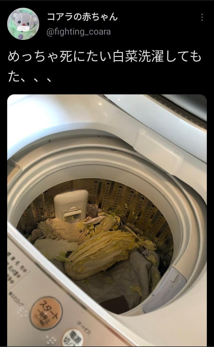 【画像】Twitter民「白菜洗濯してもうた」