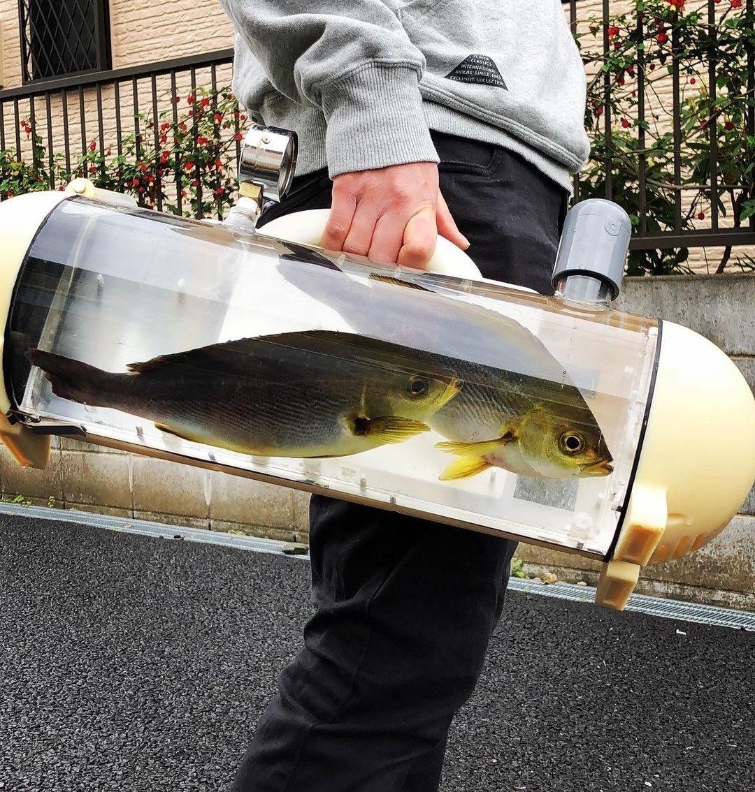 【画像】魚を散歩させる器具、開発される