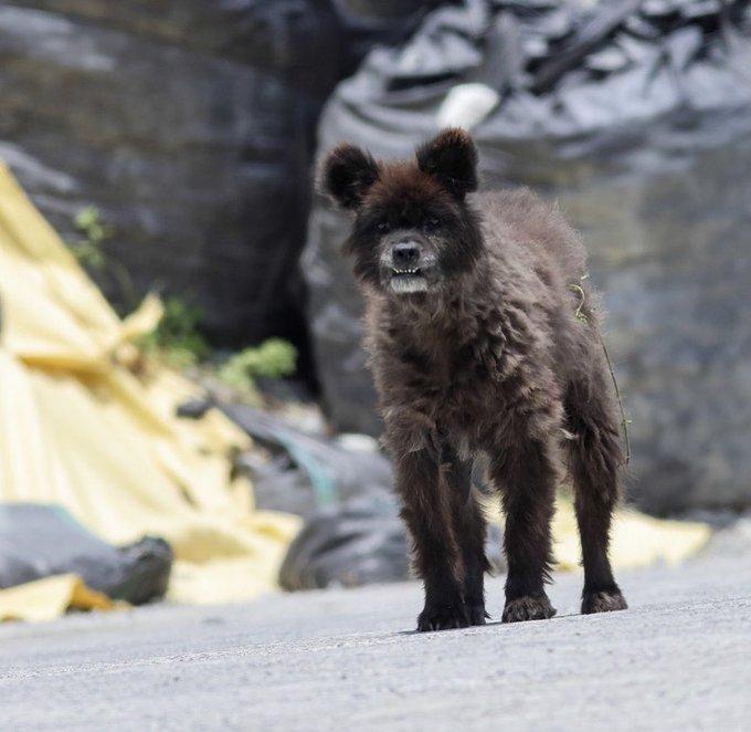【画像】福島県でクマと野犬と馬のハイブリッドした生物が発見されるwwww