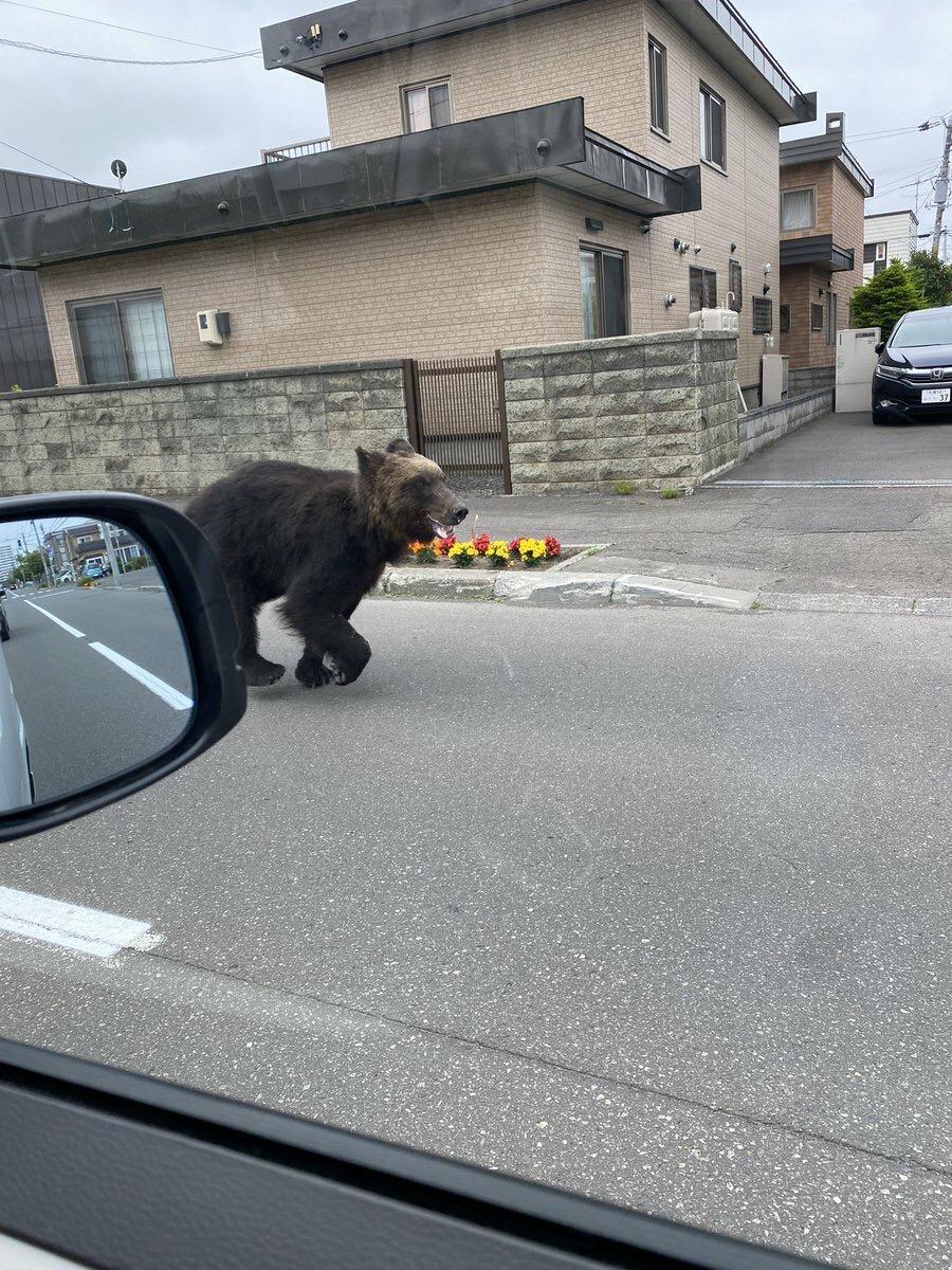 【速報】🐻札幌市街地にクマ!!!イオンや小学校に出没 ケガ人も