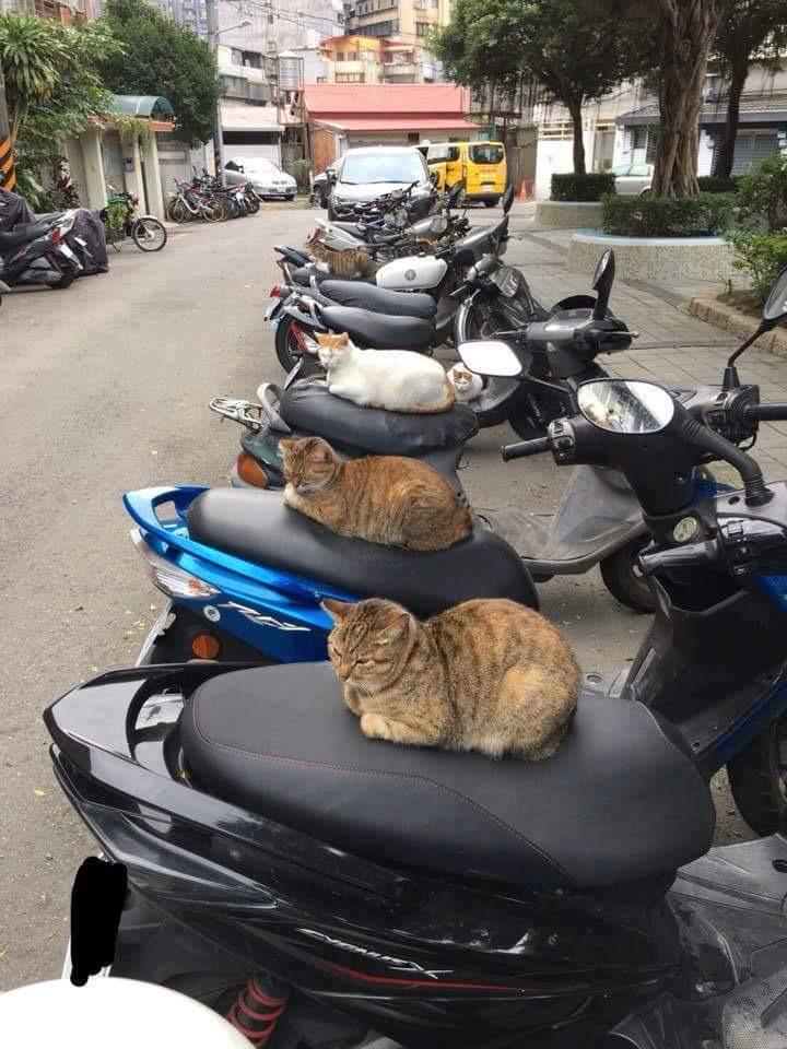 【画像】バイクに猫ちゃんが座ってて草