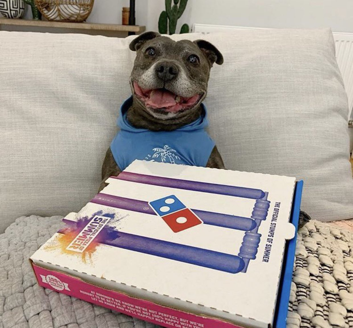 【画像】イッヌさん、期待外れのピザに硬直してしまうwwwwww