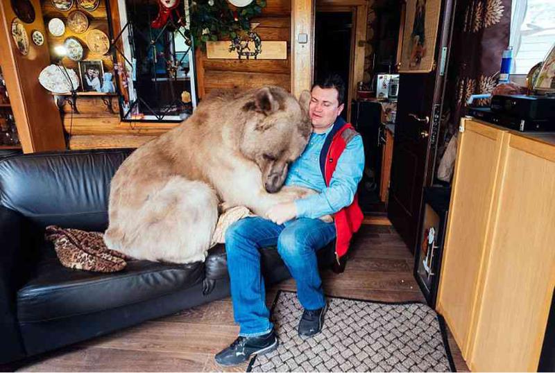 【画像】ロシア人夫婦「ファッ!?衰弱した小熊おるやんけ!育てたろww」