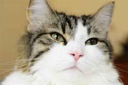 死を予言する超能力のあるネコ「オスカー」