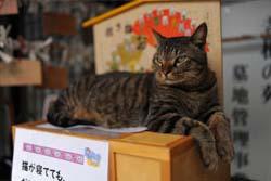 【福井】「猫寺」御誕生寺に愛好家集う、境内に52匹