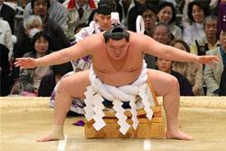 相撲協会の握手会wwwww