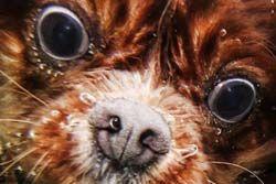 (U^ω^)「潜ったお」 水中の犬の写真がいろいろとヤバイ