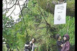 【鳥取】「柿はいただくぜ」と予告状、25人が白昼堂々柿をもぎ取っていく