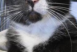【画像あり】「おなら」が止まらなかった猫、引き取られて2日間で施設に戻される