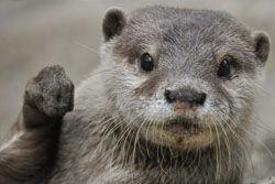 コツメカワウソとの握手コーナーが人気・・・市川市動植物園
