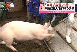 【画像】小学生が飼育した豚を出荷→肉になって戻ってきた;e4