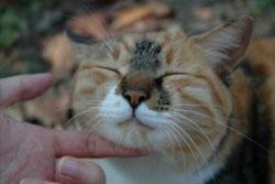 猫が出す「お前のこと好き」のサイン